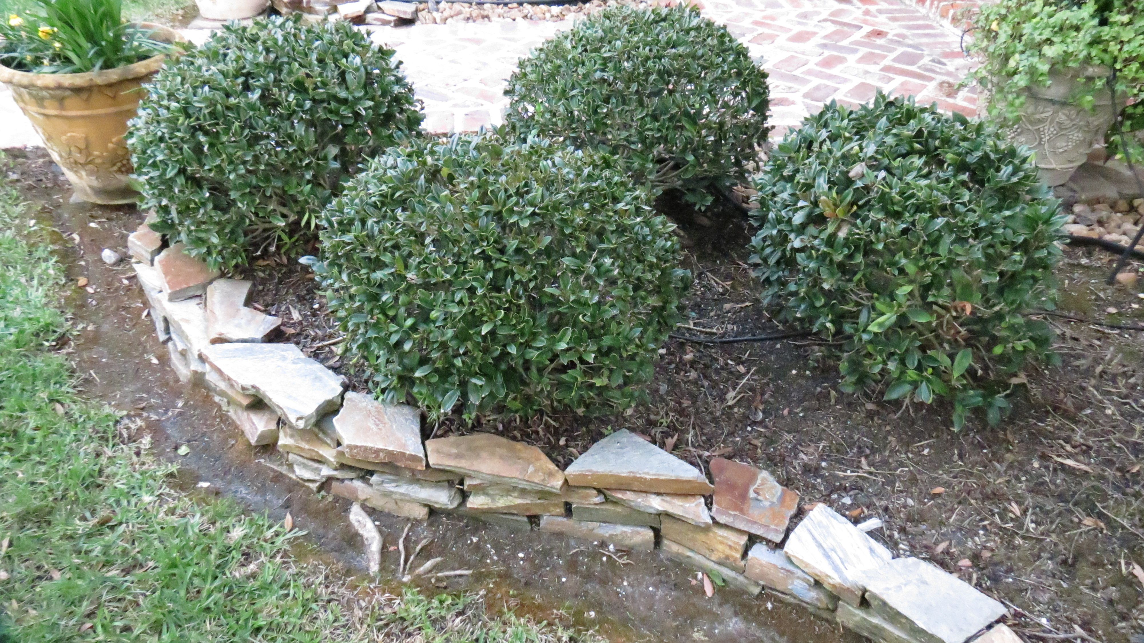 Number One Lawn Service In Beaumont Texas